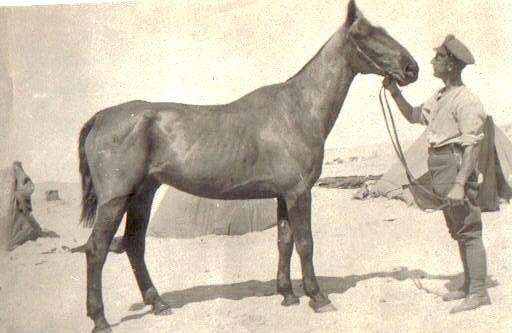 Samuel Haynes Gaza
